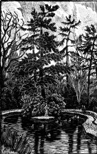 wood-engraving original print: Langford Grove